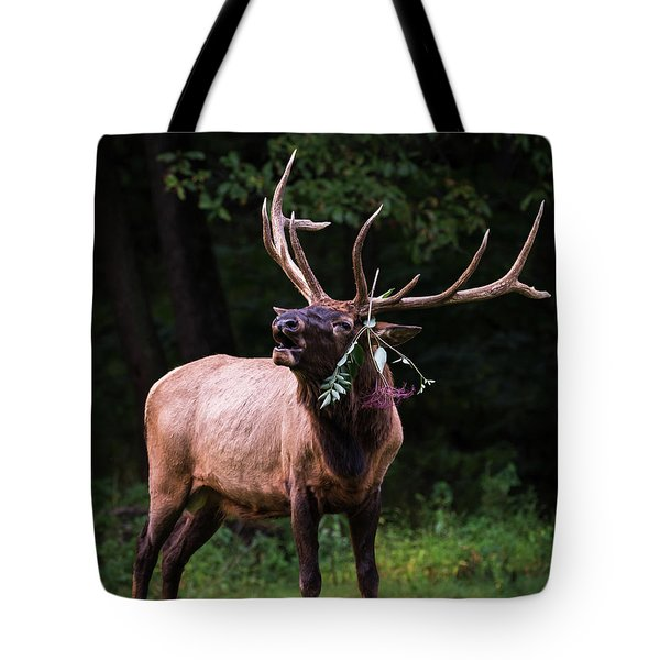 Tote Bag featuring the photograph Serenade  by Andrea Silies