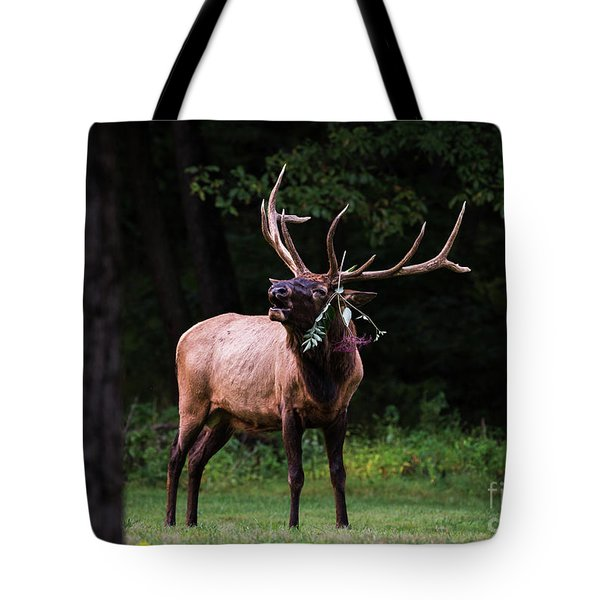 Tote Bag featuring the photograph Serenading by Andrea Silies