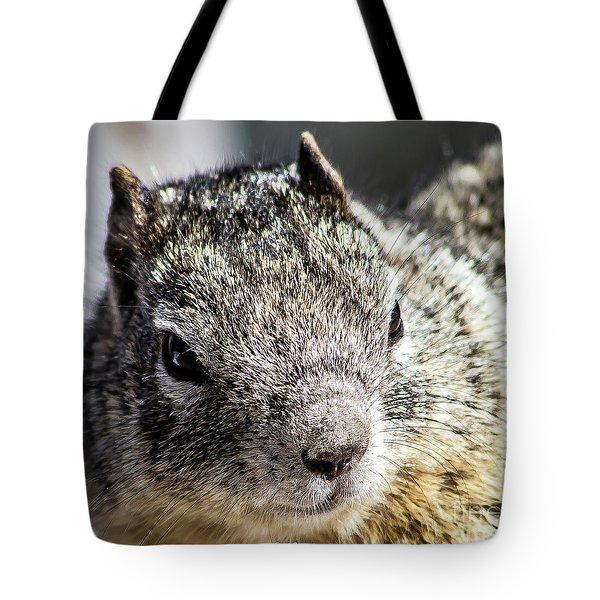 Serious Squirrel Tote Bag