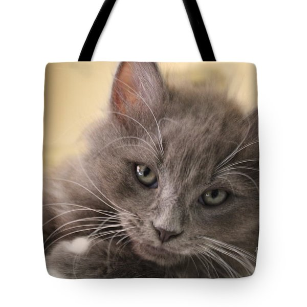 Seriously Bro Just Stop With The Photos  Tote Bag by Scott D Van Osdol
