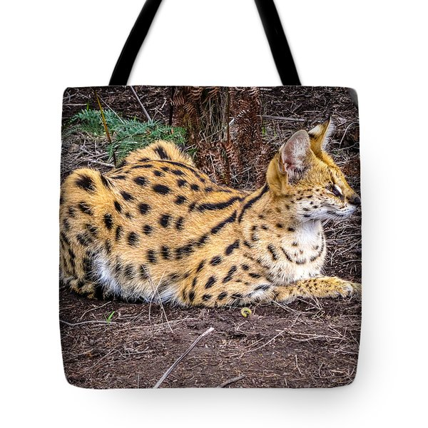 Serval On The Prowl Tote Bag by Gregory Daley  PPSA