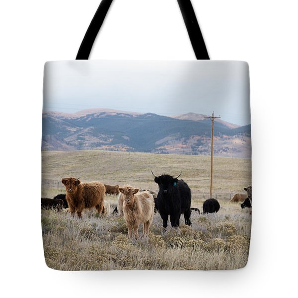 Shaggy-coated Cattle Near Jefferson Tote Bag