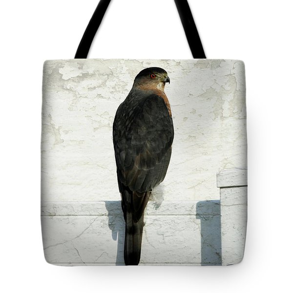 Tote Bag featuring the photograph Sharp Shinned Hawk by Jackson Pearson
