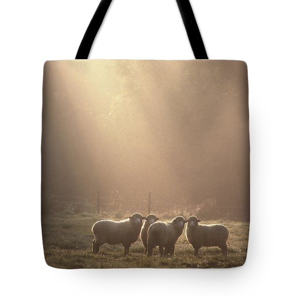 First Light. Sheep Underhill Vt Tote Bag