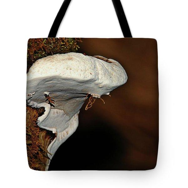 Shelf Fungus On Bark - Quinault Temperate Rain Forest - Olympic Peninsula Wa Tote Bag