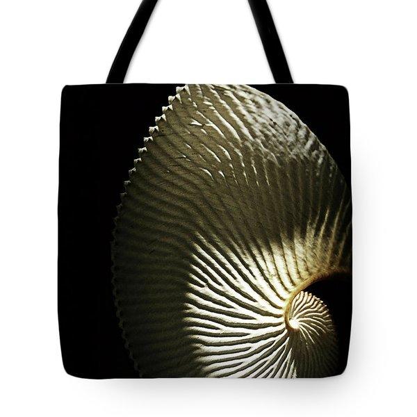 Seashell Fan On Black  Tote Bag