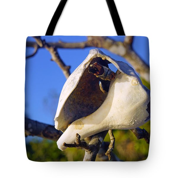 Shell On Brach Of Mangrove Tree At Barefoot Beach In Napes, Fl Tote Bag