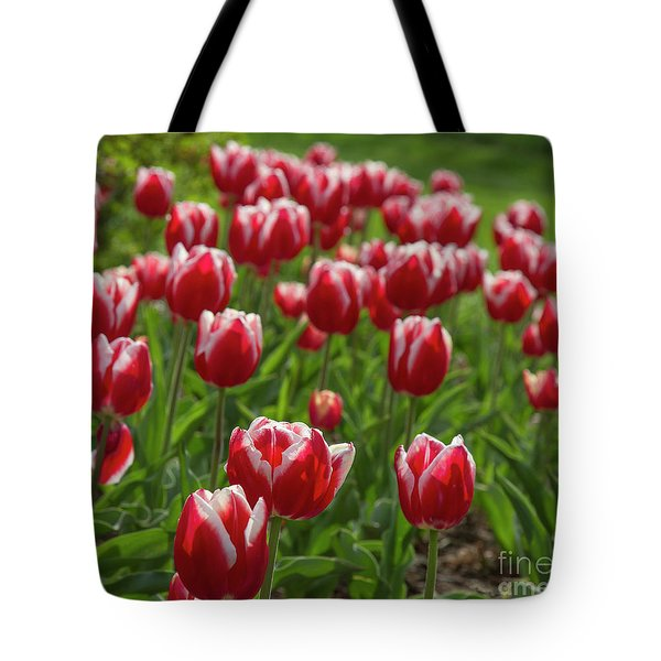 Tote Bag featuring the photograph Sherwood Gardens 19 by Chris Scroggins
