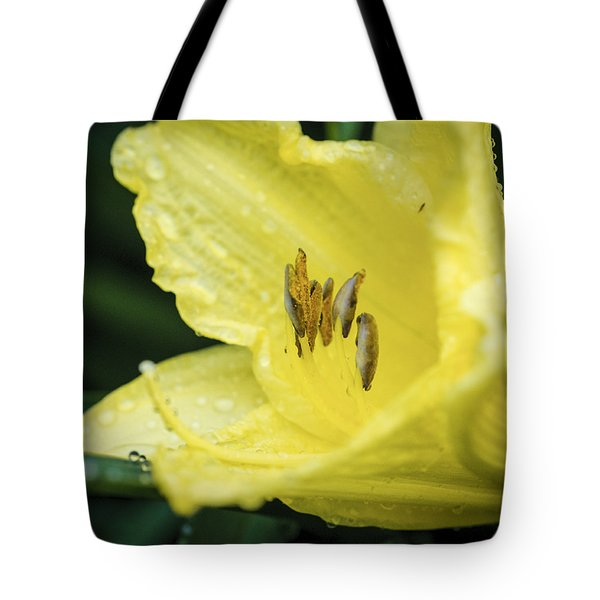 Tote Bag featuring the photograph Shielded From The Rain by Christi Kraft