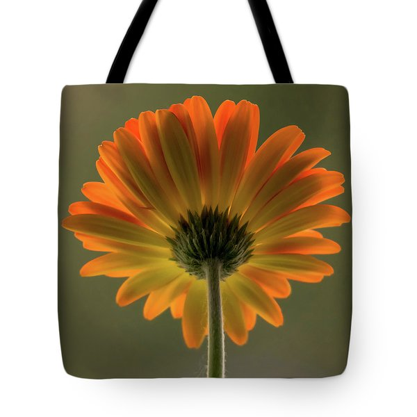 Shine Bright Gerber Daisy Square Tote Bag by Terry DeLuco