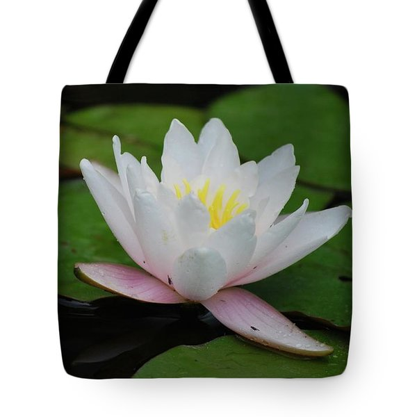 Tote Bag featuring the photograph Shining Bright by Amee Cave