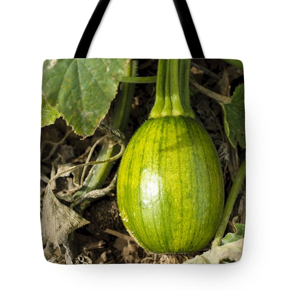 Tote Bag featuring the photograph Shiny Squash by Christi Kraft