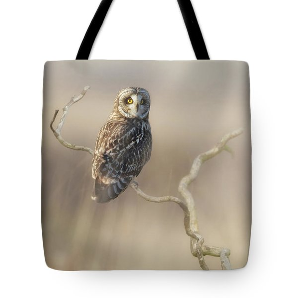 Tote Bag featuring the photograph Short-eared Owl by Angie Vogel