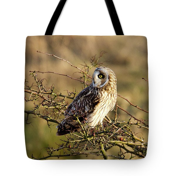 Short-eared Owl In Tree Tote Bag