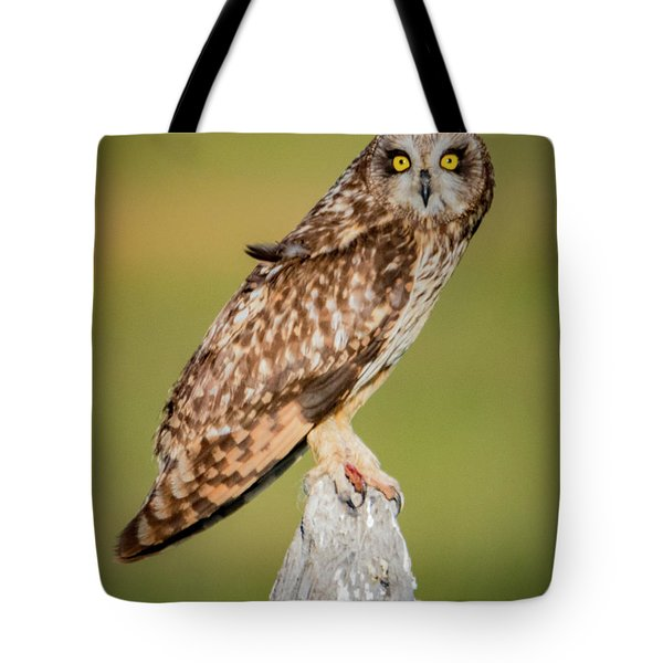 Short Eared Owl Tote Bag