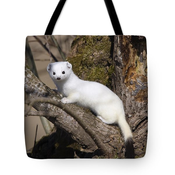 Short-tailed Weasel Mustela Erminea Tote Bag by Konrad Wothe