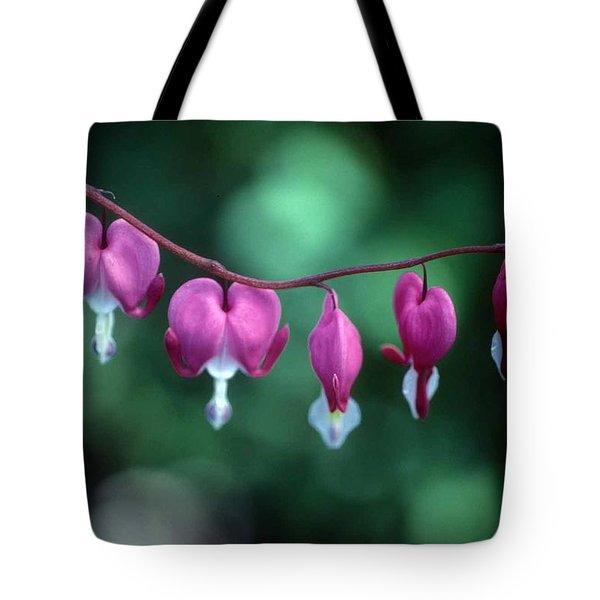 Showy Bleeding Hearts  Tote Bag by Laurie Paci