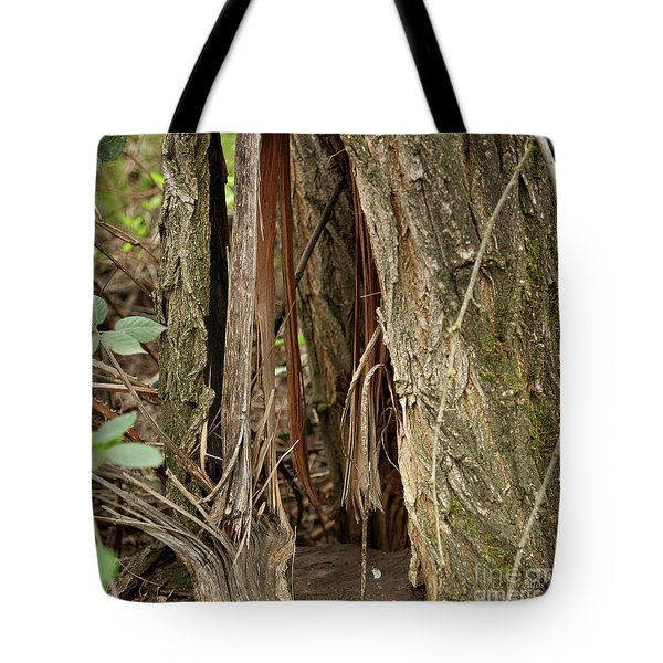 Tote Bag featuring the photograph Shredded Tree by Carol Lynn Coronios