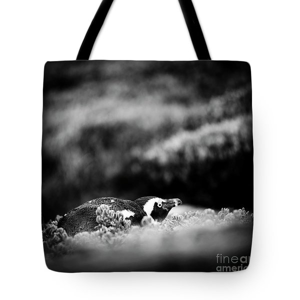 Tote Bag featuring the photograph Shy African Penguin Black And White by Tim Hester