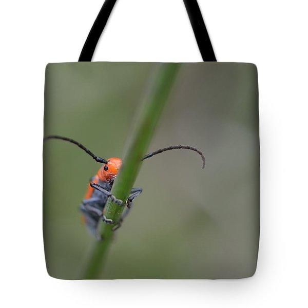 Shy Beetle Tote Bag by Janet Rockburn