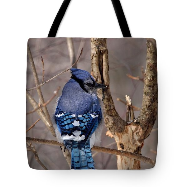 Shy Blue Jay  Tote Bag by David Porteus