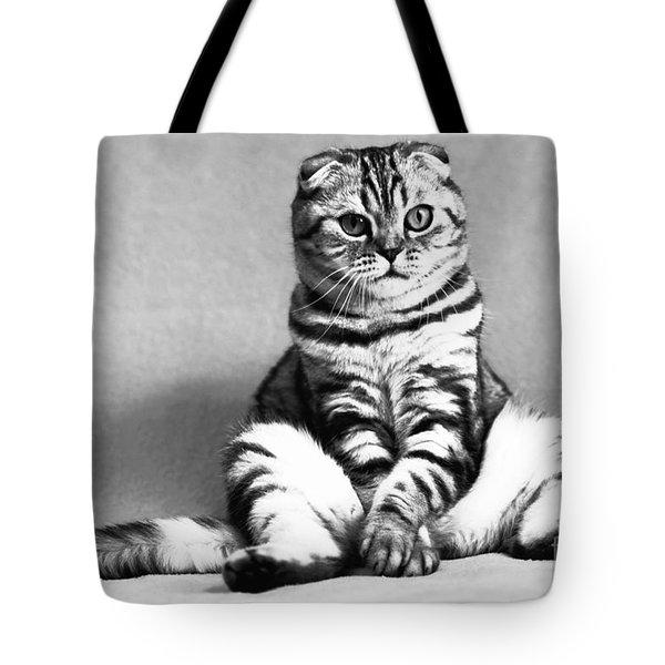 Shy Cat Tote Bag