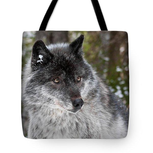 Shy II Tote Bag