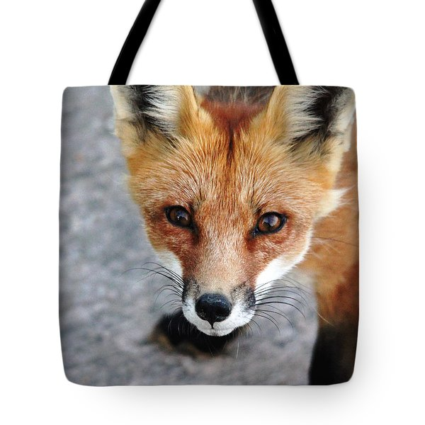 Tote Bag featuring the photograph Shy Red Fox  by Debbie Oppermann