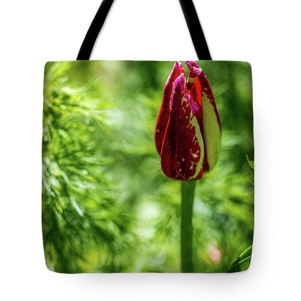 Shy Tulip Tote Bag