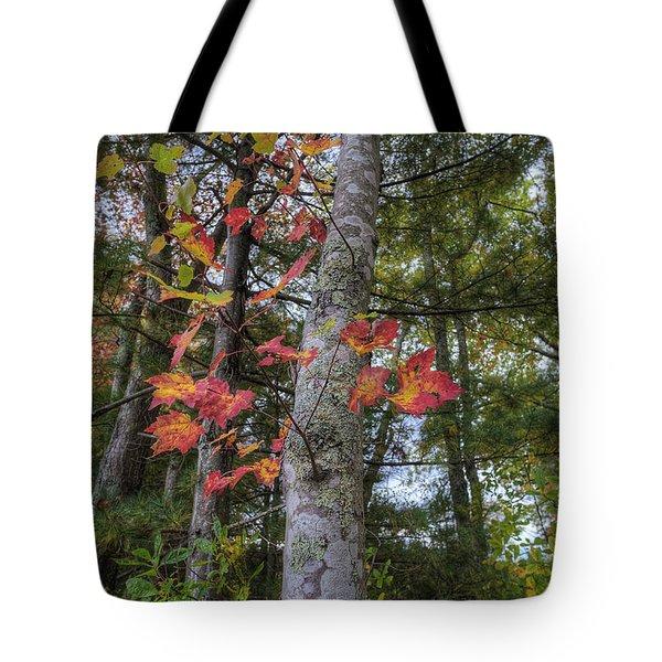 Sign Of Fall Tote Bag