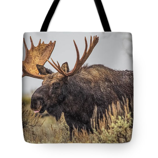 Silly Moose  Tote Bag by Kelly Marquardt