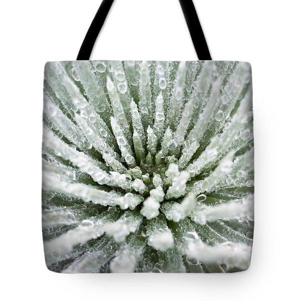 Tote Bag featuring the photograph Silversword Center by Charmian Vistaunet