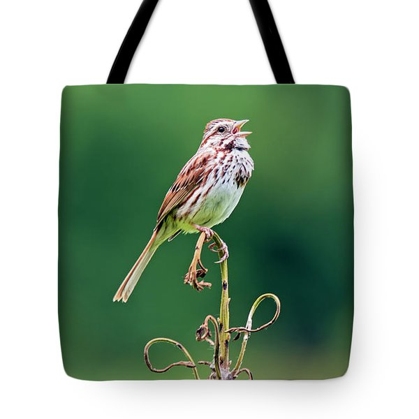 Singing Song Sparrow Tote Bag
