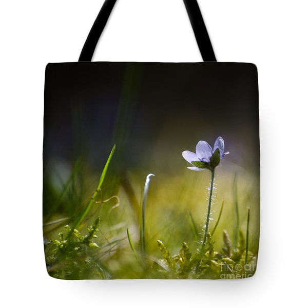 Tote Bag featuring the photograph Single Backlit Hepatica by Kennerth and Birgitta Kullman