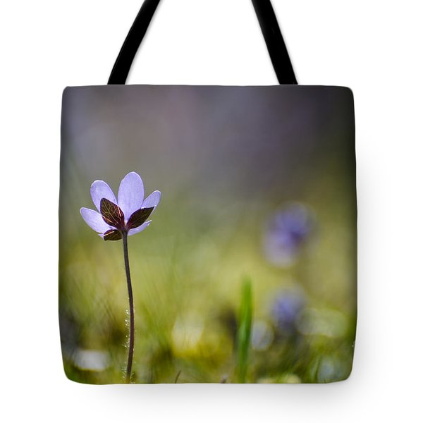 Tote Bag featuring the photograph Single Hepatica From Low Perspective by Kennerth and Birgitta Kullman