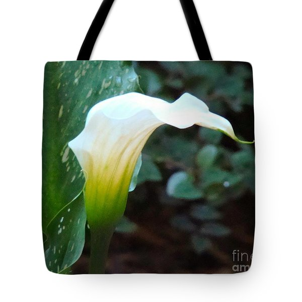 Single Lily  Tote Bag by Rand Herron