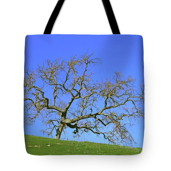 Tote Bag featuring the photograph Single Oak Tree by Art Block Collections