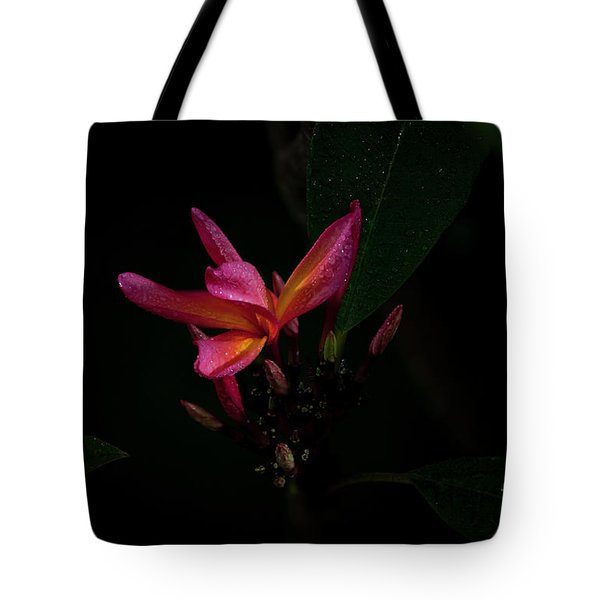 Single Red Plumeria Bloom Tote Bag