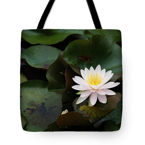 Tote Bag featuring the photograph Single White Pristine Lotus Lily by Dennis Dame