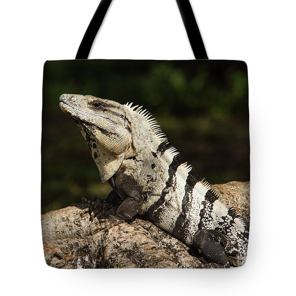 Sir Iguana Mexican Art By Kaylyn Franks Tote Bag