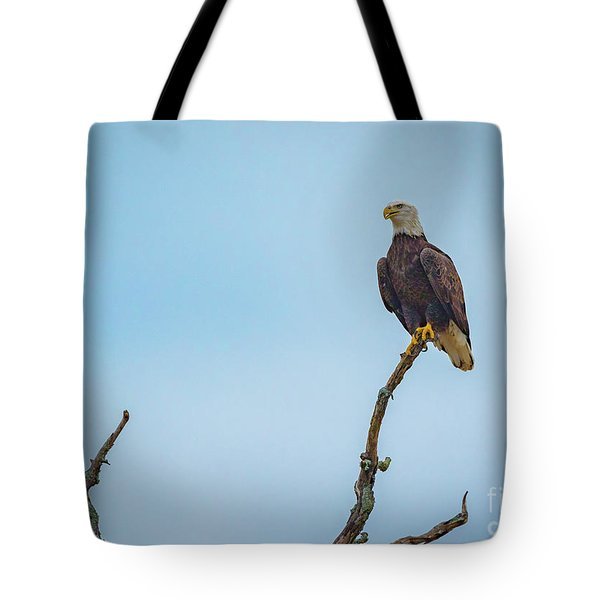 Sitting Patiently Tote Bag