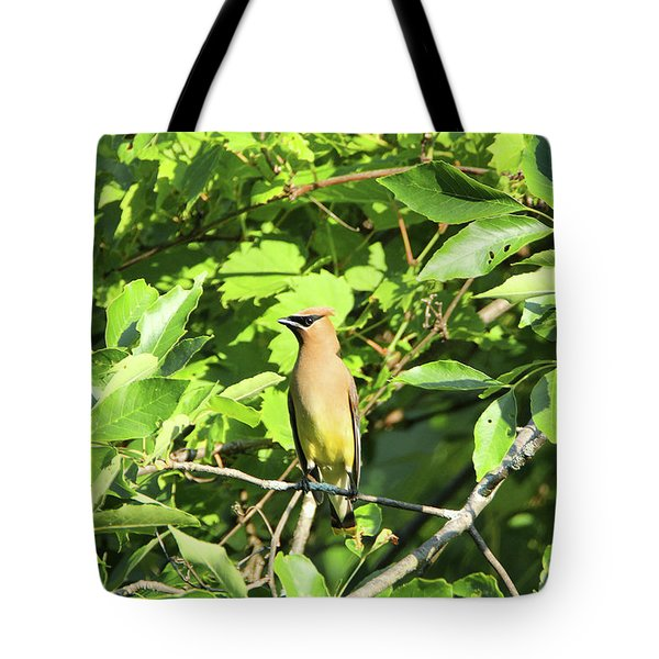 Sitting Pretty Tote Bag by David Stasiak