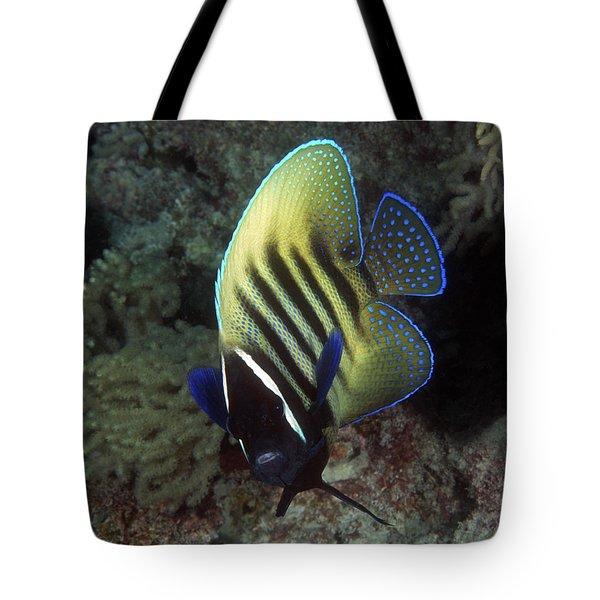 Six Banded Angelfish, Great Barrier Reef Tote Bag