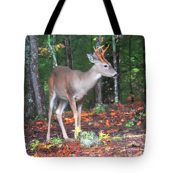 Six Point Whitetail Tote Bag