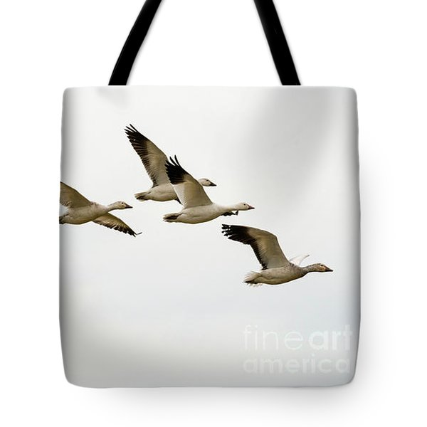 Tote Bag featuring the photograph Six Snowgeese Flying by Mike Dawson