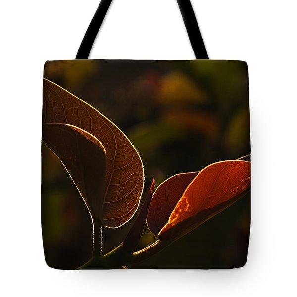 Skc 9841 Lovable Pair Tote Bag by Sunil Kapadia