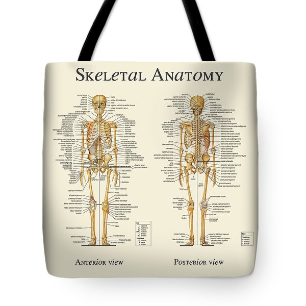 Skeletal Anatomy Tote Bag by Gina Dsgn