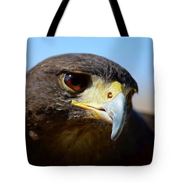 Sky Dancer - Harris Hawk Tote Bag