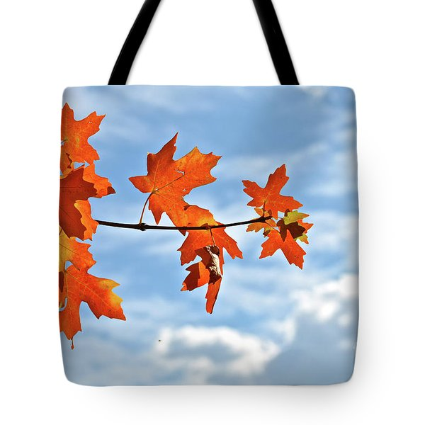 Sky View With Autumn Maple Leaves Tote Bag