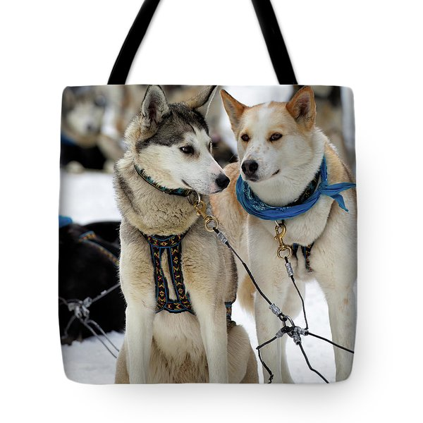 Sled Dogs Tote Bag